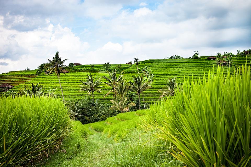 Bali Itinerary